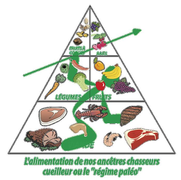 """Voici la liste des aliments """"autorisés"""" dans le régime paléolithique"""